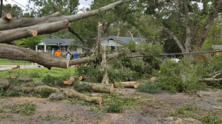Neighbors grouped together Monday on Jewell Road to cut apart this tree that had falledn at 7:30 a.m. and pulled down power lines. (Dan Scanlan/Florida Times-Union)
